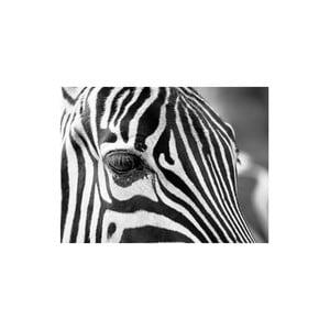 Obraz Zebra, 60x80 cm