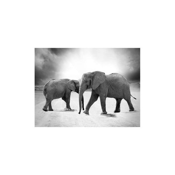 Obraz Elephants, 60x80 cm