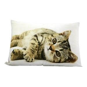 Vankúš Cat 50x35 cm