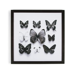 Obraz v ráme Graham&Brown Butterfly Studies,50x50cm