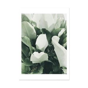 Plagát HF Living Botanic Thorn, 21×30 cm