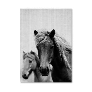 Plagát Wild Horses