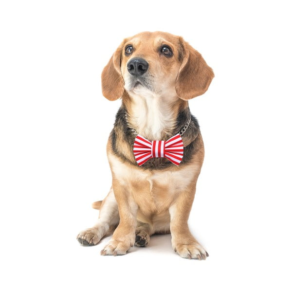 Červený charitatívny psí motýlik s proužky Funky Dog Bow Ties, veľ. M