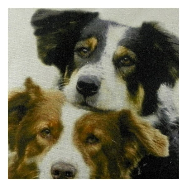 Vankúš Mars&More Border Collies, 50 x 50 cm
