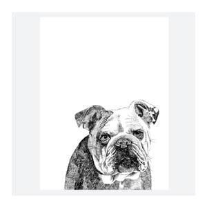 Plagát Leonard The British Bulldog, 30x40 cm