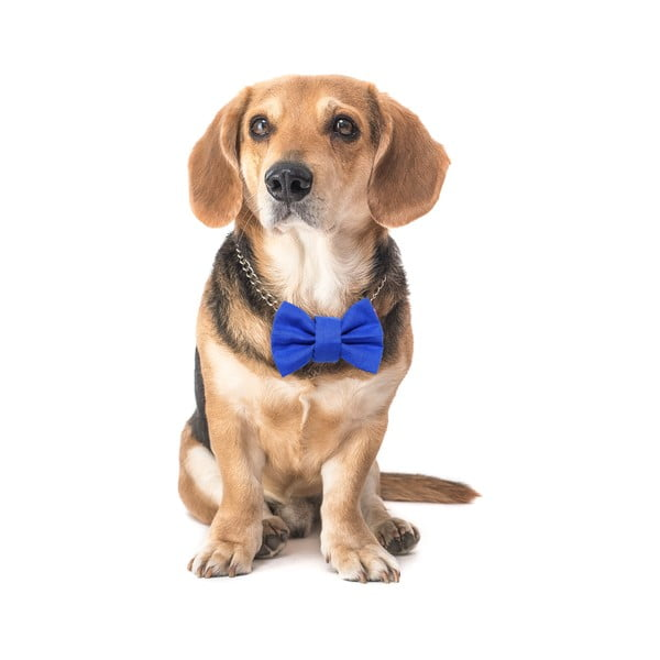 Modrý charitatívny psí motýlik Funky Dog Bow Ties, veľ. M