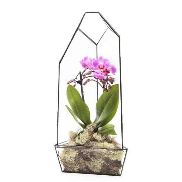 Terárium s rastlinami Super Aztec Orchid House