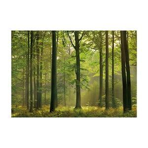 Veľkoformátová tapeta Jesenný les, 366x254 cm