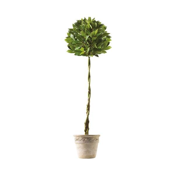 Samolepka Bay Tree