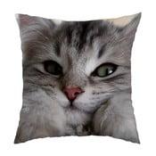 Vankúš Cute Cat, 40x40 cm