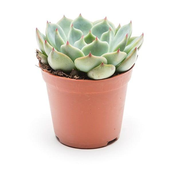 Kvetináč Individual Succulent
