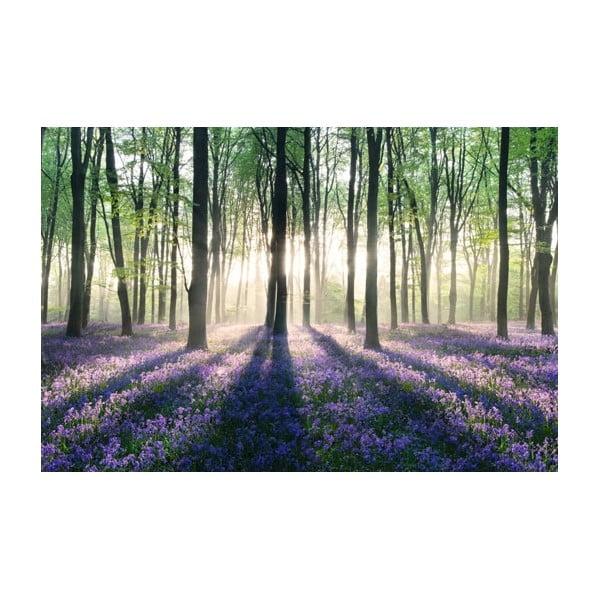 Fotoobraz Forest, 51x81 cm