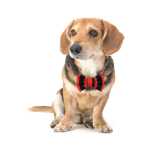 Červeno-Čierny charitatívny psí motýlik Funky Dog Bow Ties, veľ. M