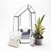 Terárium s rastlinami Aztec Gem DIY