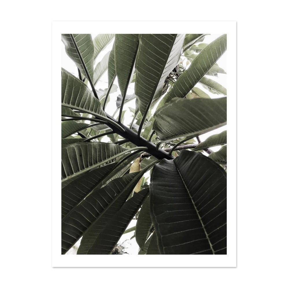 plag t hf living botanic greenery 30 40 cm bonami. Black Bedroom Furniture Sets. Home Design Ideas