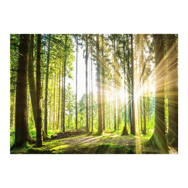 Veľkoformátová tapeta Artgeist Forest Tales, 300×210 cm