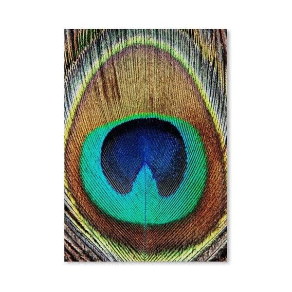 Plagát Peacock Feather