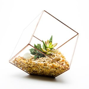 Terárium s rastlinami Cube Terrarium, svetlý rám