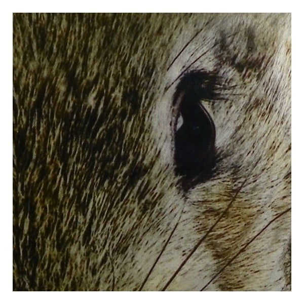 Vankúš Rabbit, 50x50 cm