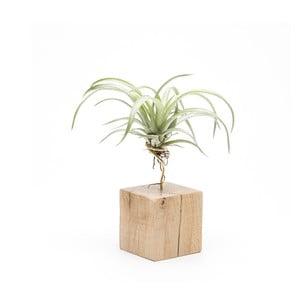 Drevený kvetináč Urban Botanist Air Plant Petite