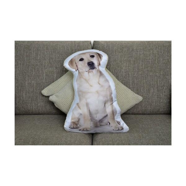 Vankúšik Adorable Cushions Zlatý labrador