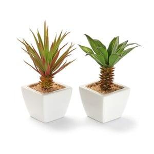 Sada 2 keramických kvetináčov s rastlinkami Tall Pots