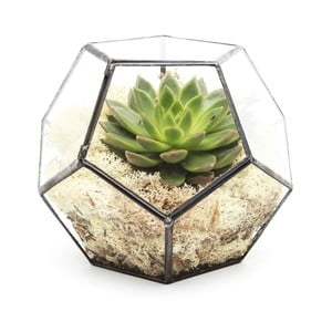 Terárium s rastlinami Penta