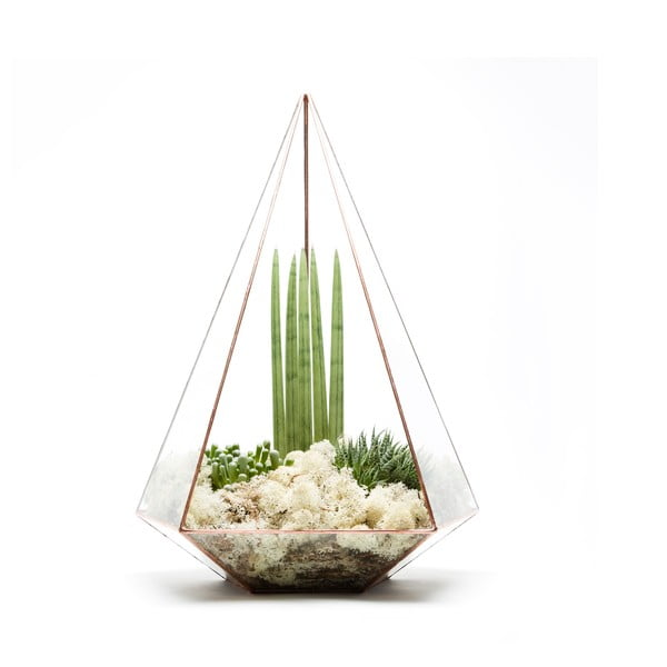 Terárium s rastlinami Supersize Jewel, svetlý rám