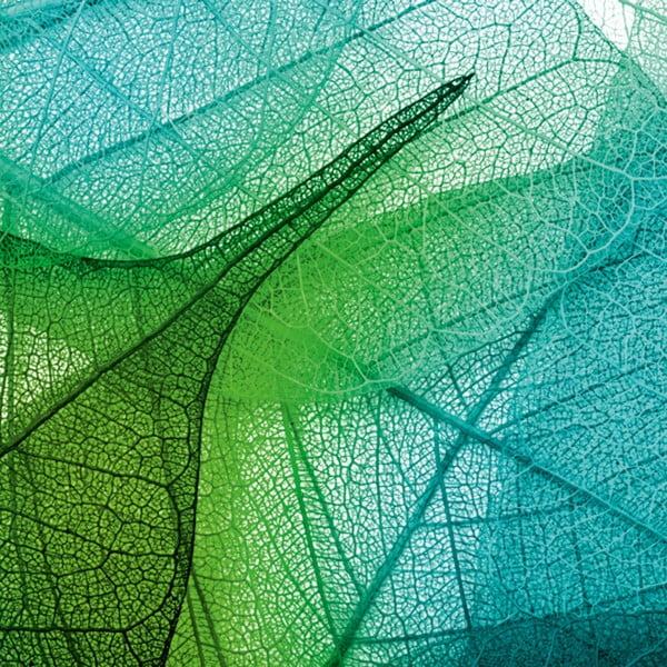 Obraz Krajka z lístia, 60x60 cm