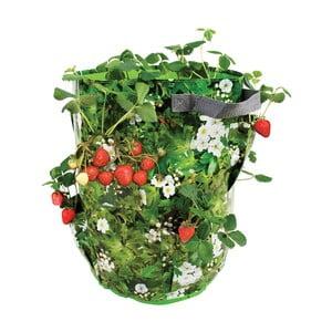 Nádoba na pestovanie jahôd a byliniek Esschert Design Berry
