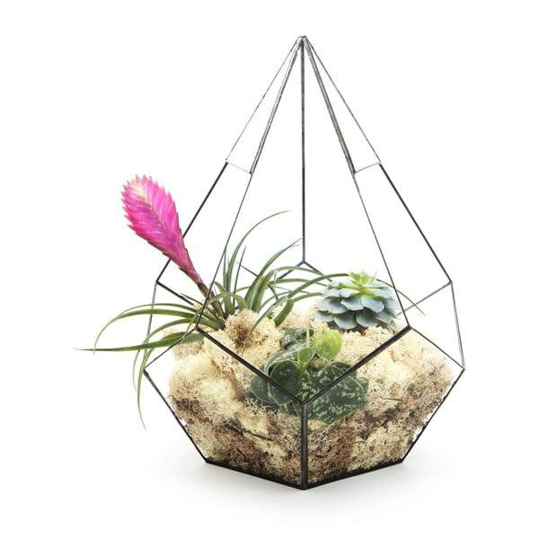 Terárium s rastlinami Super Aztec Prims