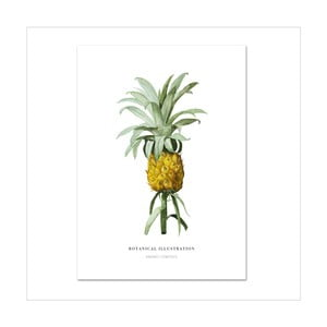 Plagát Leo La Douce Ananas Comosus, 21x29,7cm