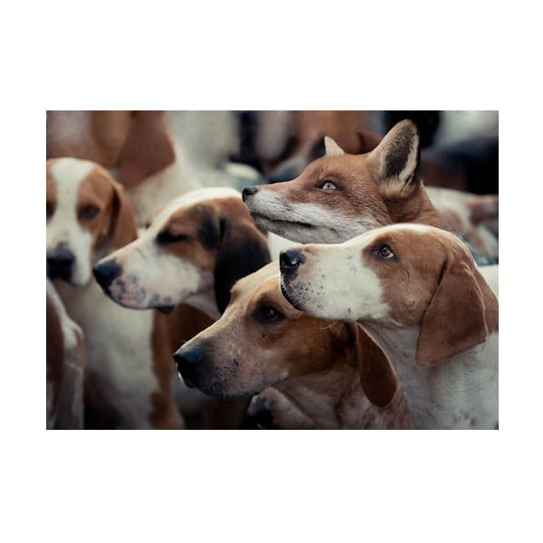 Predložka Foxhounds 75x50 cm