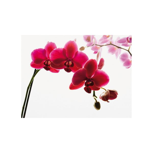 Veľkoformátová tapeta Orchidea, 315x232 cm