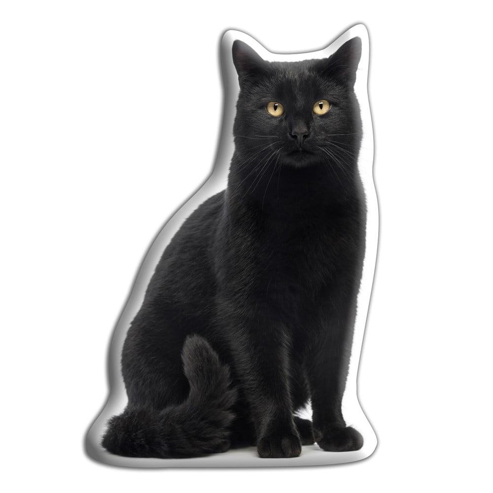 zrelé šírenie mačička pics