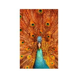 Obraz Páv, 45x70 cm