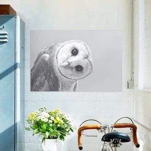 Obraz na plátne OrangeWallz Owl, 60 x 90 cm