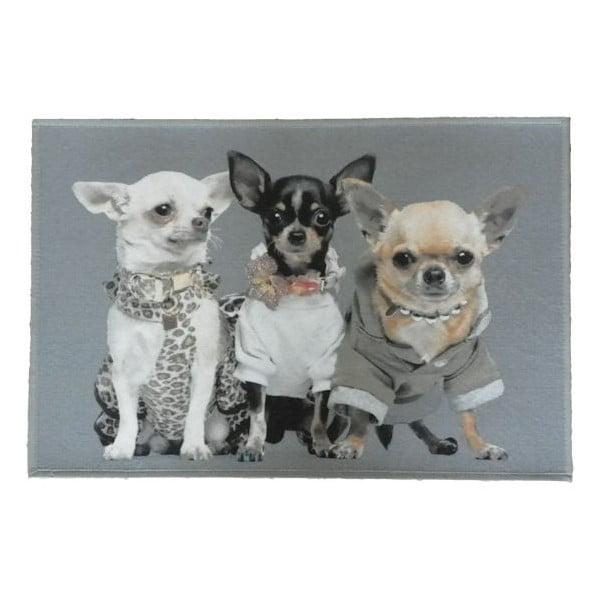 Predložka  Chihuahuas 75x50 cm