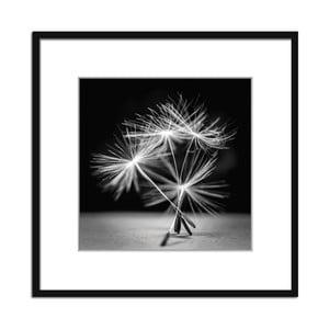 Obraz Styler Artbo× Dandel I, 50 x 50 cm