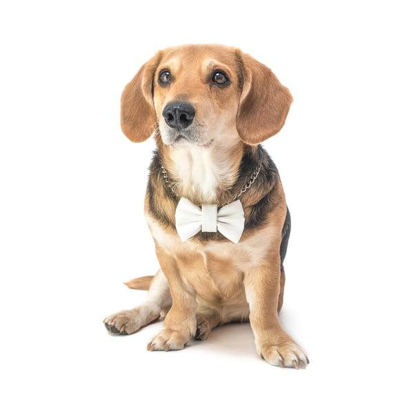 Biely charitatívny psí motýlik Funky Dog Bow Ties, veľ. S