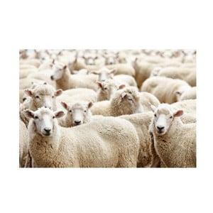 Prestieranie Sheep 40x30 cm