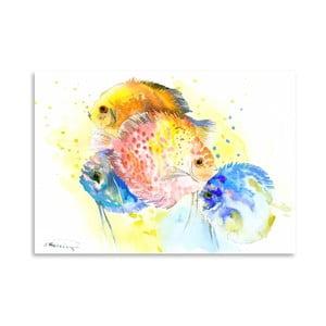Plagát Discus Fish Rainbow