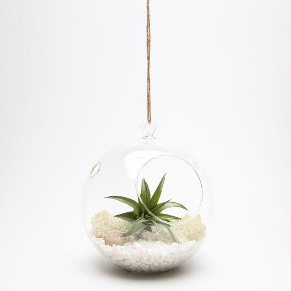 Terárium s rastlinami Globe