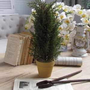 Dekoratívny strom Cipresso
