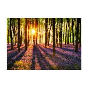 Veľkoformátová tapeta  Les pri západe slnka, 366x254 cm