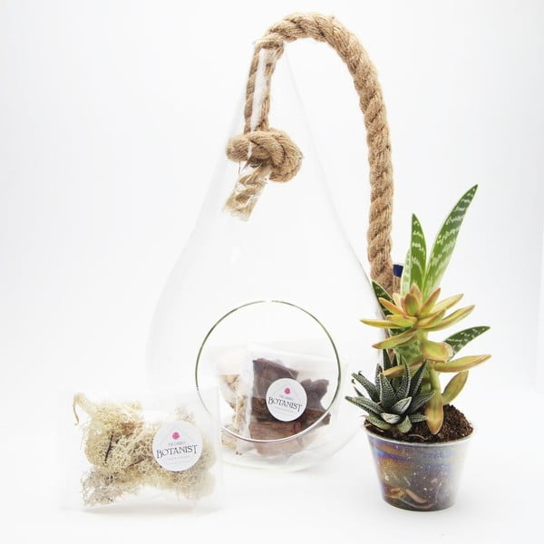 Terárium s rastlinami Pacific Tear Drop DIY