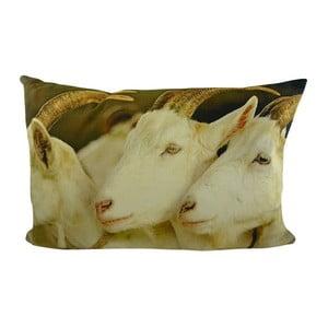 Vankúš White Goats 60x40 cm