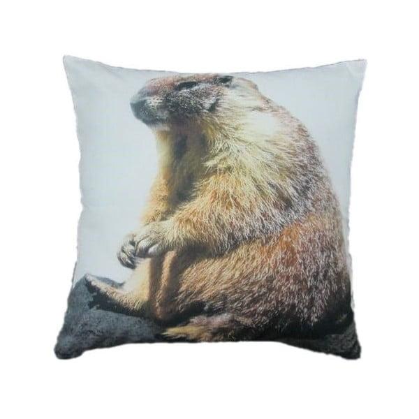 Vankúš Marmot 50x50 cm