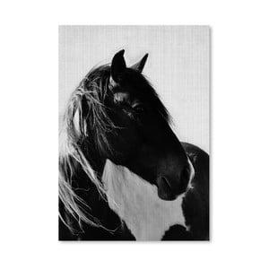Plagát Horses