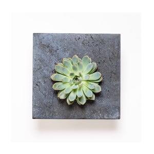 Nástenný kvetináč so sukulentom Wall, 27x27 cm